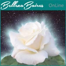 Curso de Sanación con Rosas